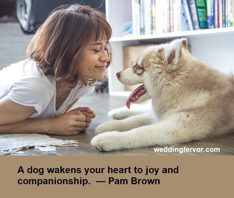 doggie companionship